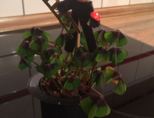 gluecksklee-schornsteinfeger-gluecksbringer-silvester-neujahr